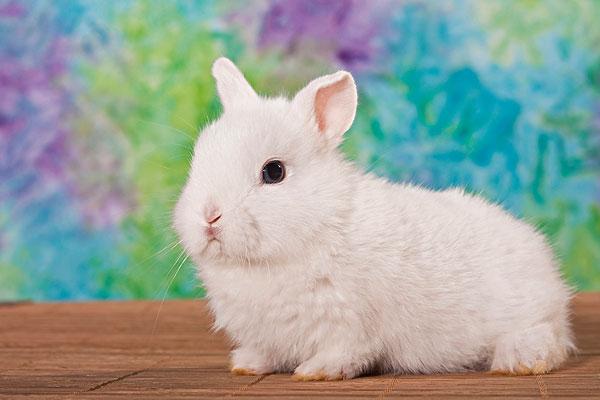可爱的小兔子配图
