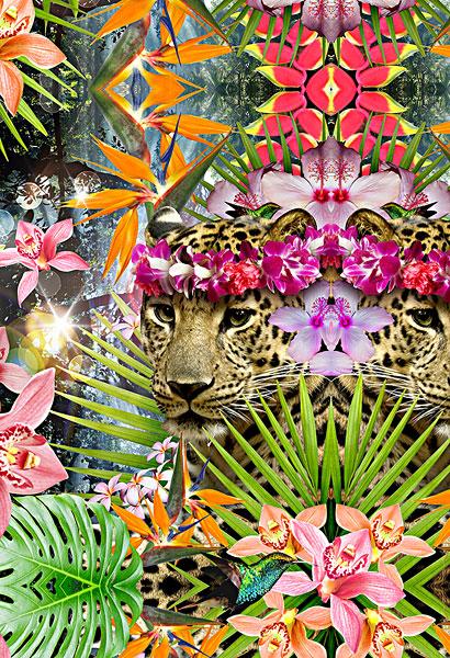 热带植物图片_全景网
